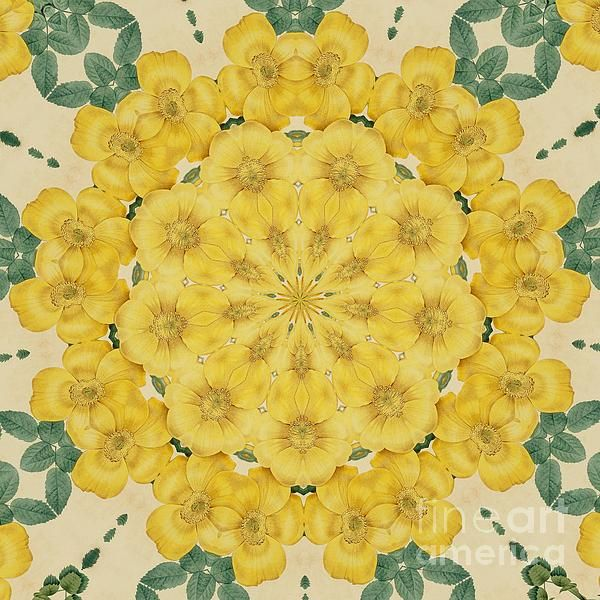 Yellow Rose Kaleidoscope-1 by Becky Hayes
