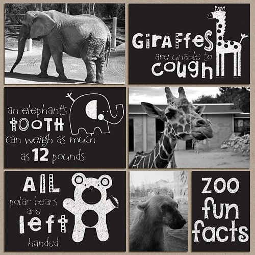 Zoo layout with Studio Wendy chalk action