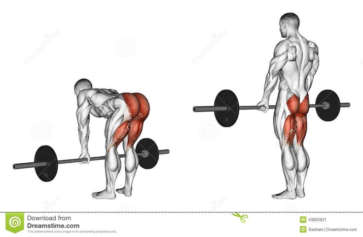 Exercising. Deadlifts With A Barbell, Legs Straigh Stock Illustration - Image: 43825921