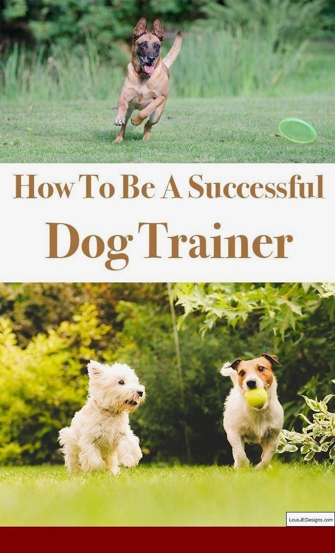 Dog Training Tips On Youtube And Pics Of How Do I Train My Dog Not