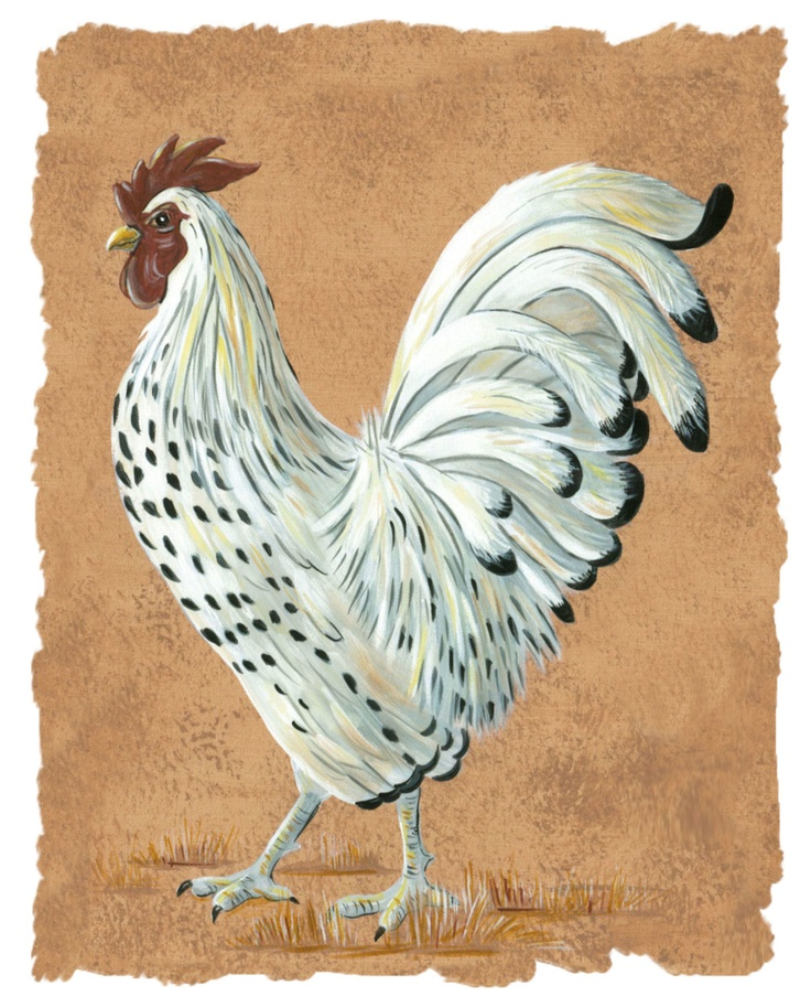 Chicken Kitchen Wall Decor 82 best roosters images on pinterest | rooster decor, roosters and