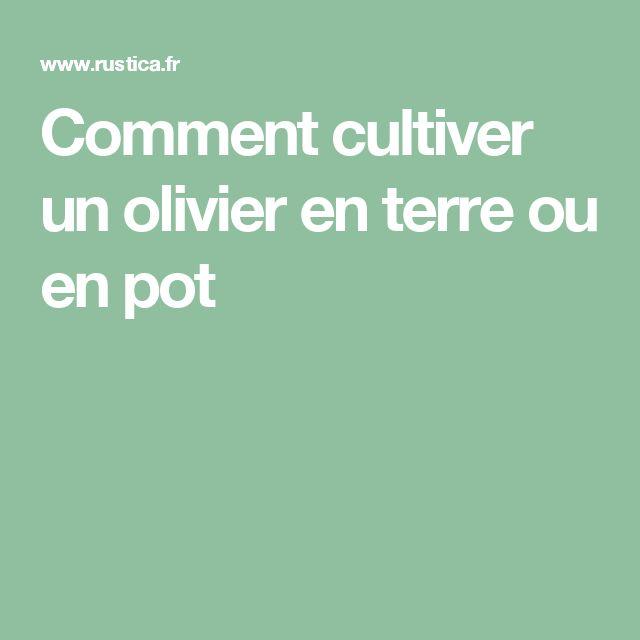 Les 25 meilleures id es concernant olivier en pot sur pinterest pots bill - Quand couper un olivier ...