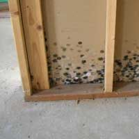1000 ideas about odor eliminator on pinterest bathroom cleaning pet odor remover and remove. Black Bedroom Furniture Sets. Home Design Ideas