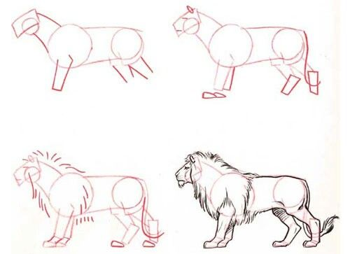Dibujar paso a paso león
