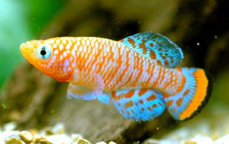 fish - Yahoo Search Results Yahoo Image Search Results