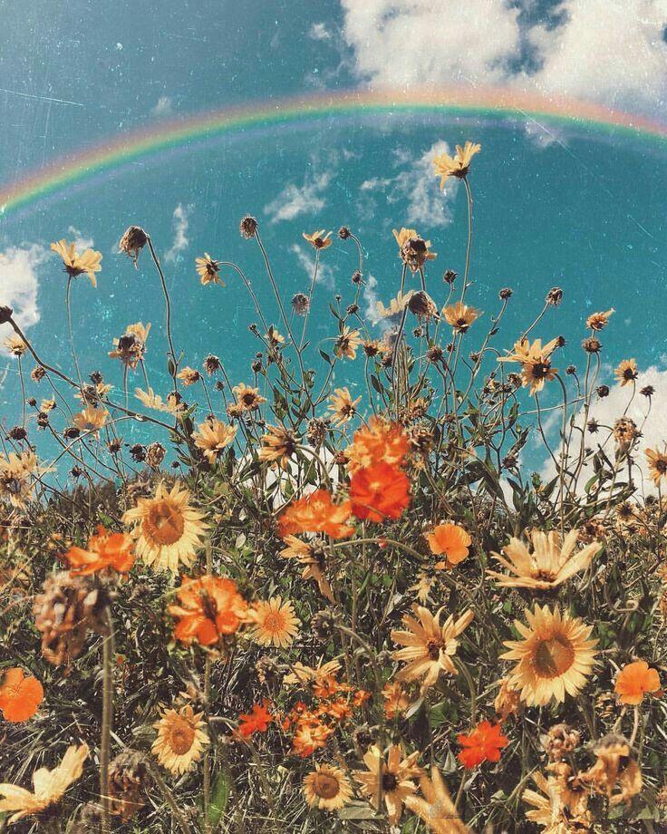 Summer Vibes Aesthetic Wallpapers Flower Aesthetic Wallpaper Backgrounds