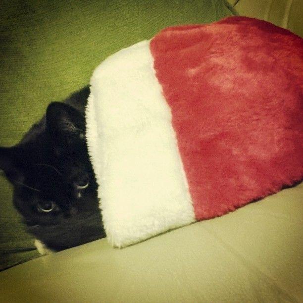 I don't like this human. #SantaPaws #cats #catsofinstagram