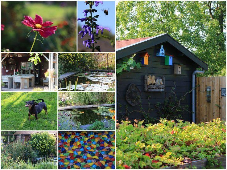 Creatief en Meer in Mussel. Blokhut, nestkastjes, meubilair, houtwerk in vrolijke kleuren. Daarbij een bonte bloemenzee!
