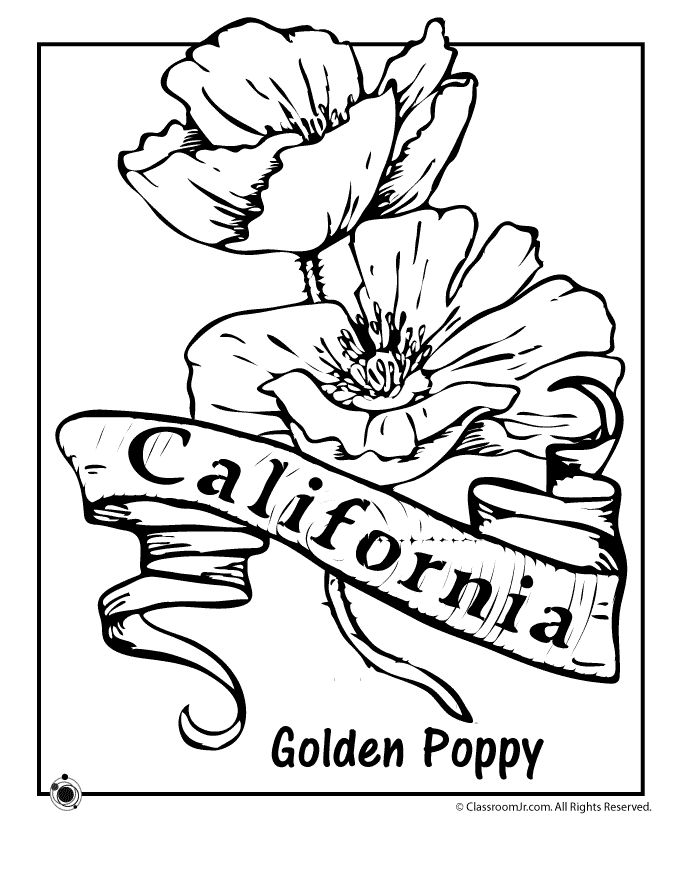 State Flower Coloring Pages California State Flower Coloring Page – Classroom Jr.