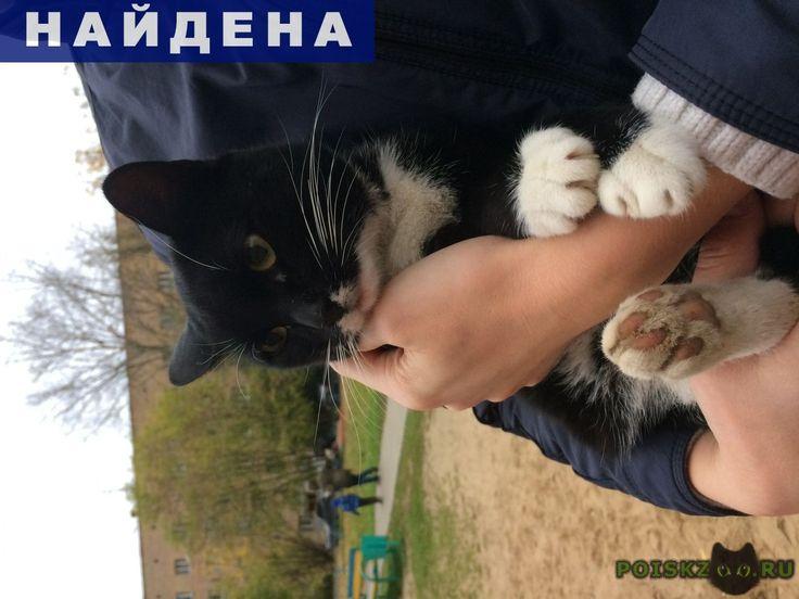Найден кот черный г.Королев http://poiskzoo.ru/board/read31571.html  POISKZOO.RU/31571 Найден кот, чёрный с белыми подушечками и мордочкой, на детской площадке, улица Ленина дом ..а, ласковый, к людям идёт с радостью!   РЕПОСТ! @POISKZOO2 #POISKZOO.RU #Найдена #кошка #Найдена_кошка #НайденаКошка #Королев