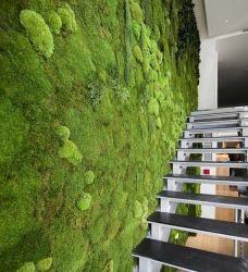 gr ne wand mit pflanzen vertikaler garten pared de musgo jardines verticales interiores und. Black Bedroom Furniture Sets. Home Design Ideas