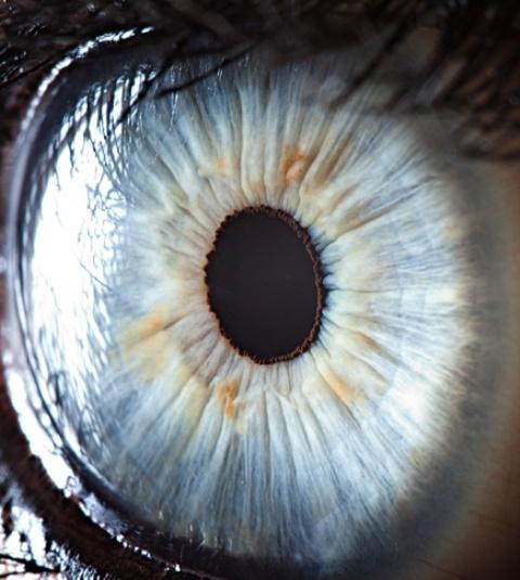 10 prim-planuri incredibile cu ochi umani