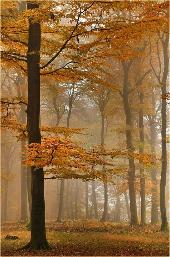 ~~Autumn Beech Forest | Germany | by Ingrid Lamour~~ www.wisdompills.com