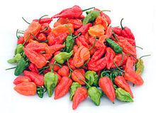 """Fresh Bhut Jolokia - """"Ghost pepper"""" Used in Northeastern India in smoke bombs and smeared on fences to repel wild elephants!!"""