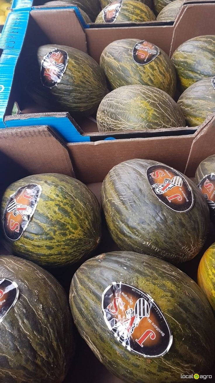 Local Agro Classifieds Fresh melons (new crop) from Yemen -1pc - FRUITS - MOSCOW - FREE INTERNATIONAL CLASSIFIEDS