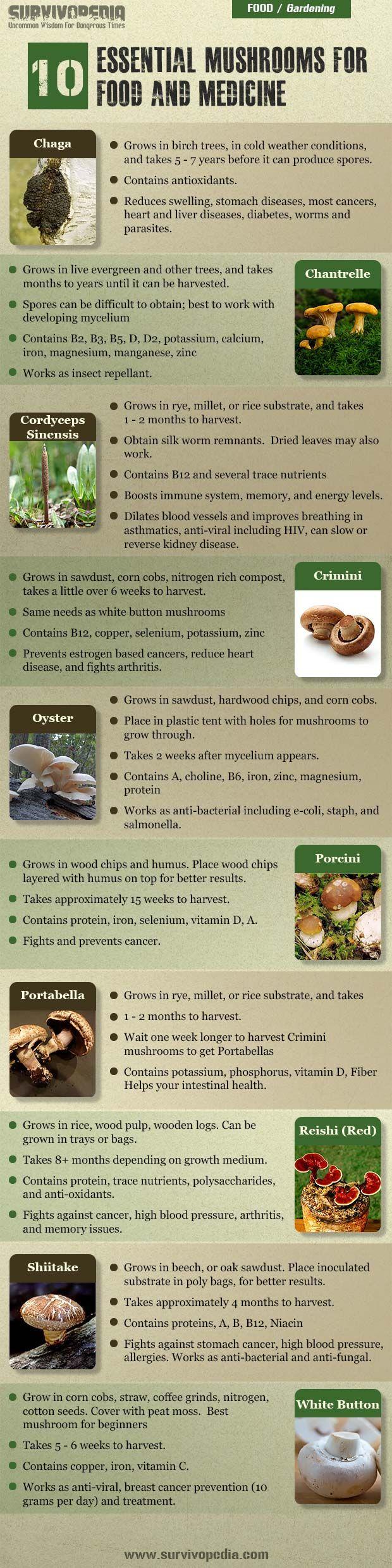 How to grow your own mushrooms | herbology, herbalism, healing plants, herbal medicine