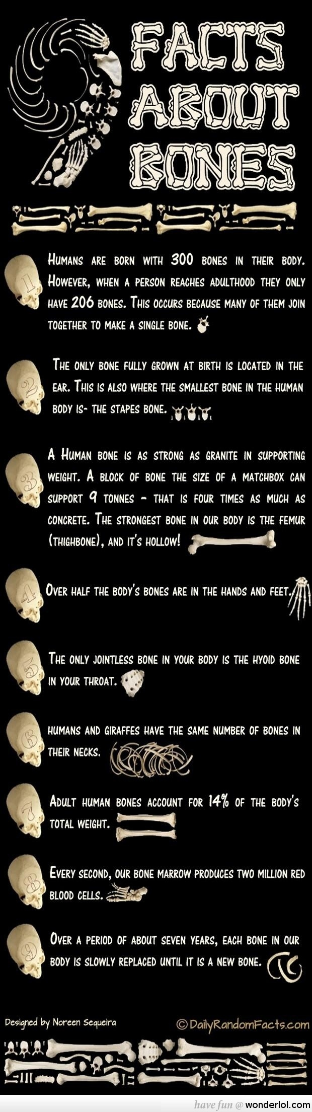 Some Interesting Facts About Human Bones That You Didn't Know