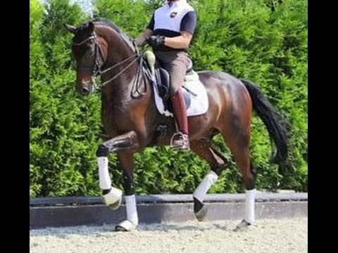 www.sporthorses-online.com 2006 top Dressage gelding for sale