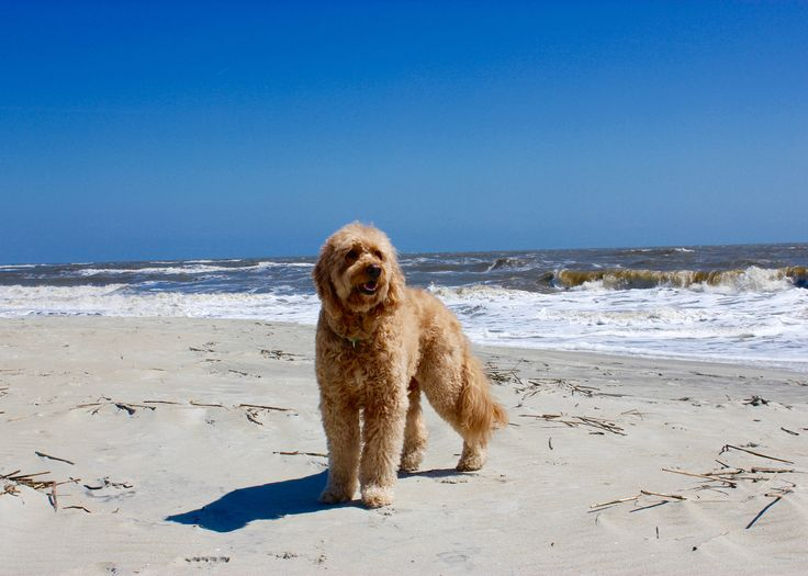 St. Simons Island Pet-Friendly Guide  Where to stay, play and things to do with you pup on island time!