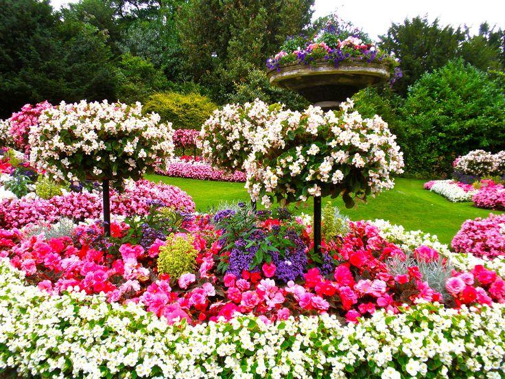 スイスの素朴な花々や、
