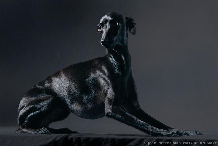 NATURE ANIMALE photo animaux et nature par le photographe animalier Jean-Pierre…