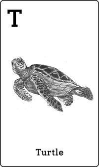 Animal 4D+ Card Turtle