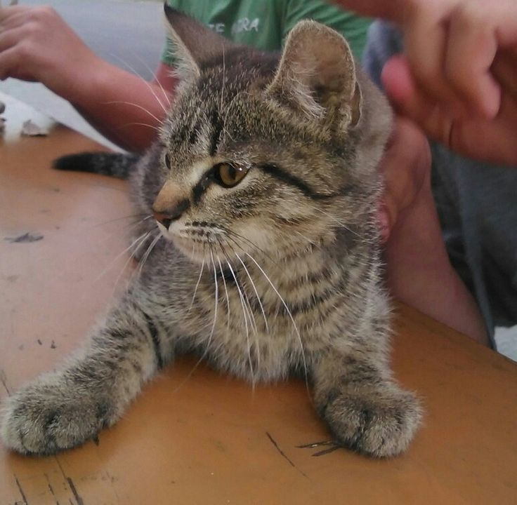 Cat Photo 2k17