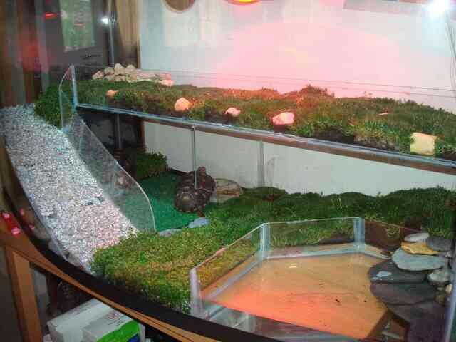Two story tortoise table tortoise turtles pinterest - Terrario para tortuga ...