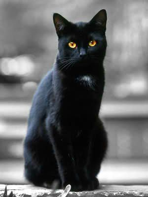 Ravenpaw | Warriors: The New Prophecy Cats In Real Life ...