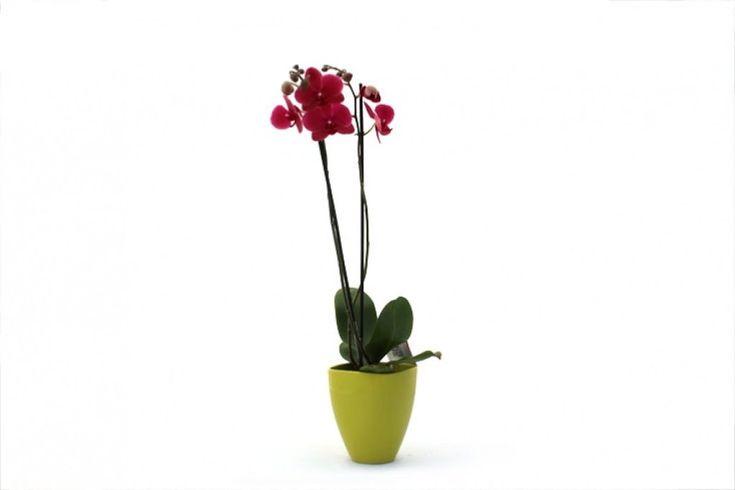 Plantas para el Día de la Madre