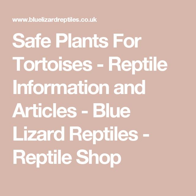 Safe Plants For Tortoises - Reptile Information and Articles - Blue Lizard Reptiles - Reptile Shop