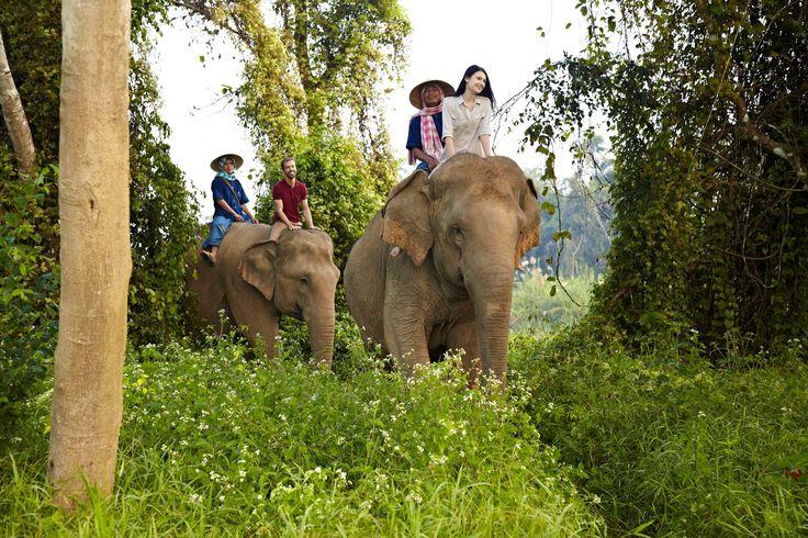 Book Anantara Golden Triangle Elephant Camp & Resort, Chiang Rai Province on TripAdvisor: See 765 traveller reviews, 974 candid photos, and great deals for Anantara Golden Triangle Elephant Camp & Resort, ranked #2 of 9 hotels in Chiang Rai Province and rated 5 of 5 at TripAdvisor.