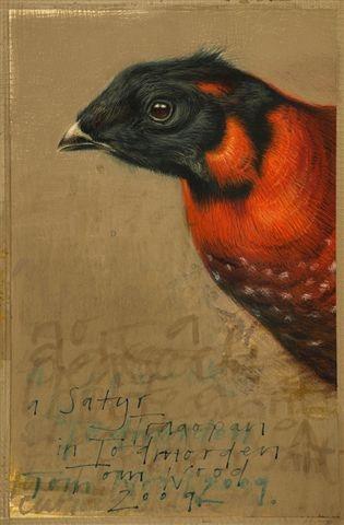 Satyr Tragopan  Gouache on paper #bird #painting