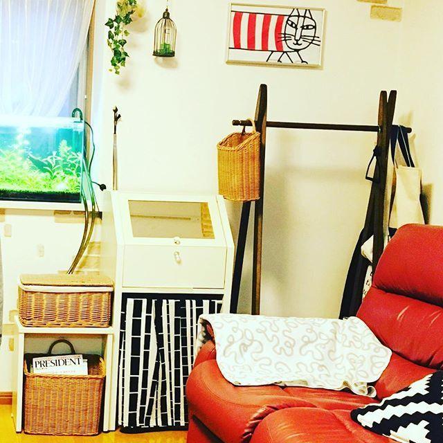 【yutakatsu_pon】さんのInstagramをピンしています。 《#水草水槽 を始めて#お魚 ちゃんたち🐠の可愛い姿に癒されますが、大変な事も多いです💦まずはこの場所に#水槽 を置くために、#模様替え を色々試してやっと落ち着きました。 次に沢山の#道具の収納 。見えてるホースの下には水を綺麗に保つ為のポンプがありますが、#ドレッサー の椅子を使って隠してます。ドレッサーの中には餌や道具が沢山、椅子をしまう場所には#突っ張り棒 で#カーテン をつけて背の高い網や、水換えの容器を隠しました☺️ #水草 たちも、すくすく成長し、#ソイル にはびっしりと#緑の絨毯 が🌿理想の#アクアリウム に少しずつ近づいてますが、今の悩みは水の透明度がなかなか保てない事😓後はホースも上手く隠せたら、と、思ってます‼️#インテリア #リビング #水槽インテリア #水槽とインテリアの共存 #悩み多し #リサラーソン #マイキー #IKEA #ナチュラルインテリア》