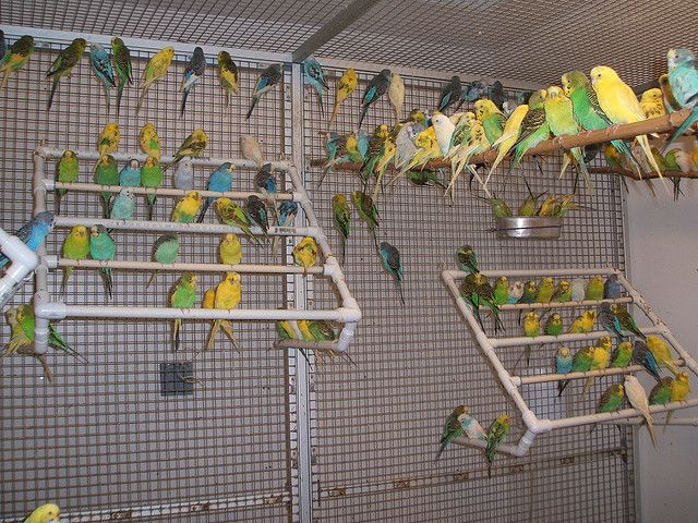 Image result for budgie aviary images