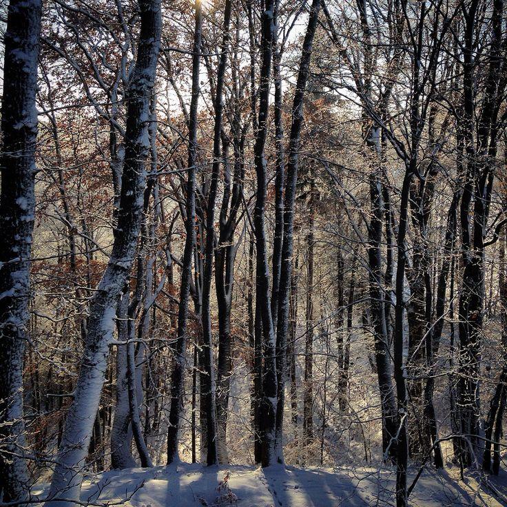 Dziki Wąwóz