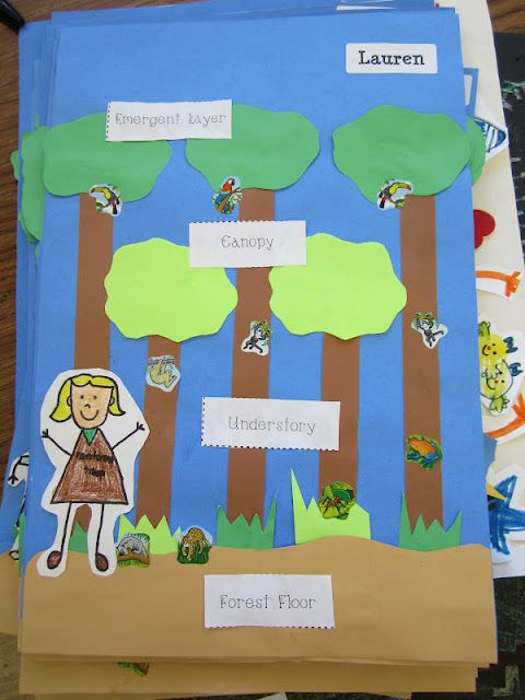 Layers of the Rainforest project