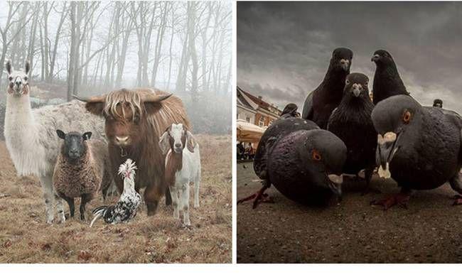 Born to Be Wild: Αυτές είναι οι πιο ροκ φωτογραφίες στο ζωικό βασίλειο