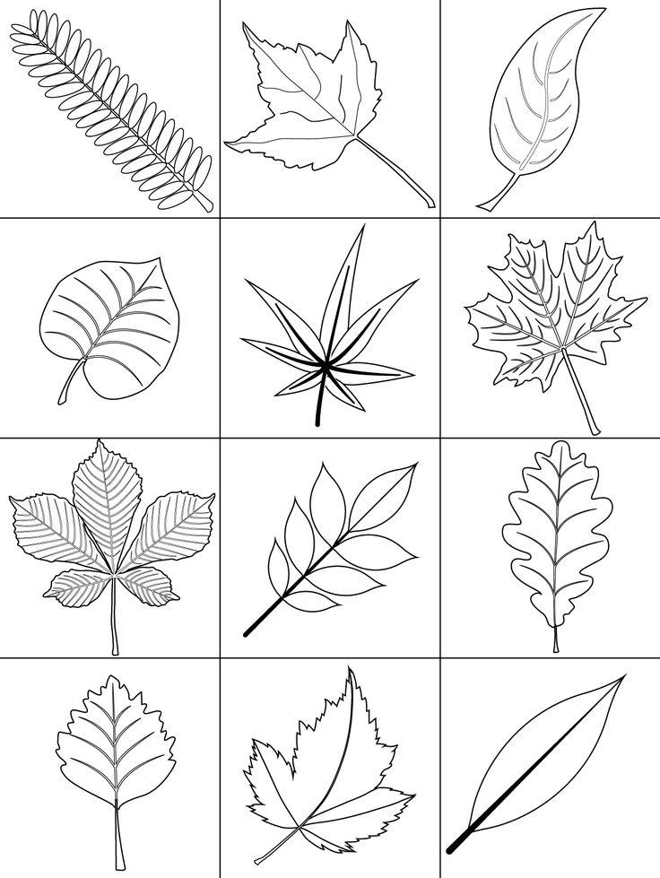 Malvorlagen Für Blätter