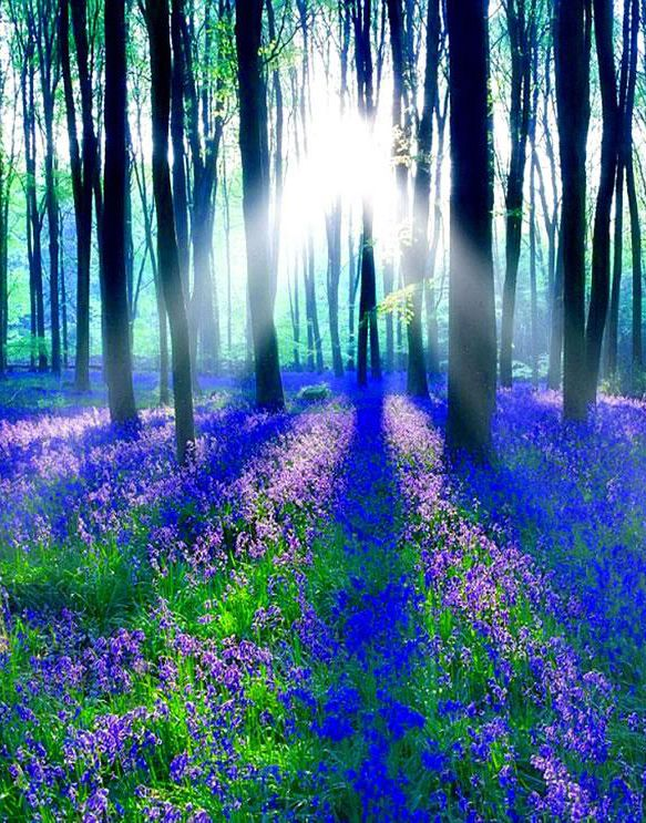 14 Best Images About Purple Forest On Pinterest