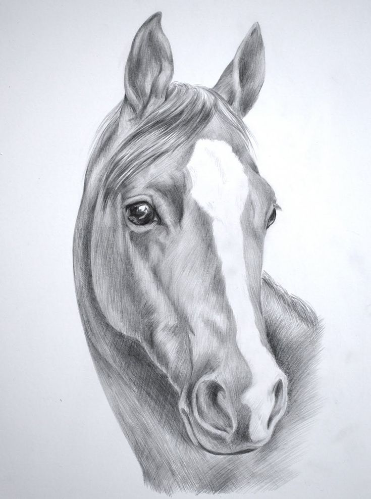 Horse Drawing In Pencil