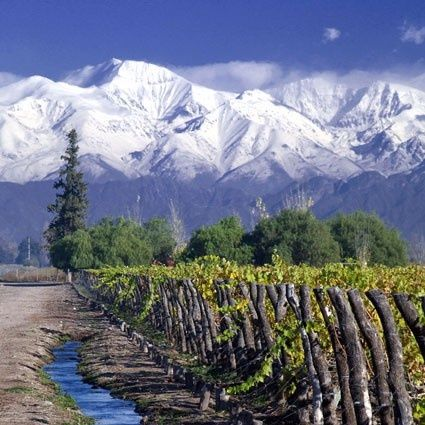 "Mendoza vineyards, Argentina.  . I grew up with ""un pie aca y un pie alla"", with one foot here and one foot there... ""With Love, The Argentina Family~Memories of Tango and Kugel; Mate with Knishes"", http://www.amazon.com/With-Love-The-Argentina-Family/dp/1478205458"