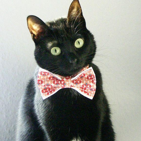 Katze: Halsbänder - Katzenhalsband mit Fliege, Bow tie - ein Designerstück von fashioncatsz bei DaWanda