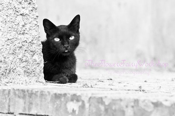 Black Cat Photography - Animal Photography - Nature - Pets - Monochromatic - Black and White Photography - Nursery Wall Decor - Wall Art on Etsy, $25.46