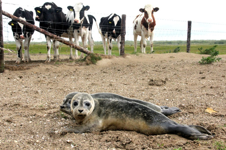 Pieterburen -  Seal Nursery Lenie 't Hart Zeehonden Creche Lenie 't Hart