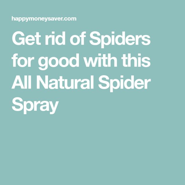 Get rid of Spiders for good with this All Natural Spider Spray
