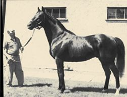 Scientists at University College Dublin (UCD) have traced the origin of the 'speed gene' in Thoroughbred racehorses back to a single British mare that lived in the United Kingdom around 300 years ago.    Read more: http://www.irishcentral.com/news/Irish-scientists-unearth-the-300-year-old-racehorse-speed-gene-138034718.html#ixzz1kVgGI0BS