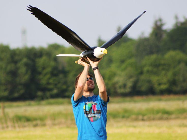 Gerçekçi Robo-Hawks tasarlanan Çevresi Fly ve Real Birds terörize etmek