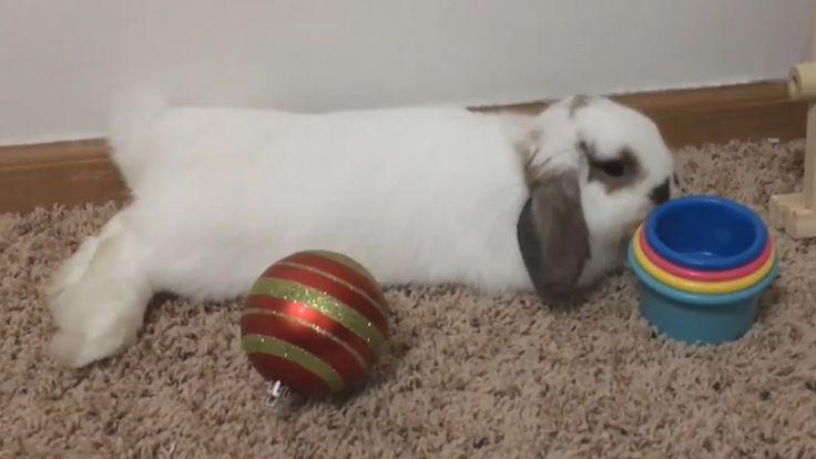 Cute Rabbit playing with toys – Lazy play!     #ARabbit, #ARabbitMovie, #ARabbit…