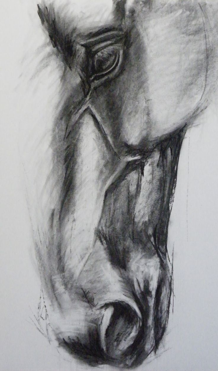 Friesian Horse Head Drawings Noh varr